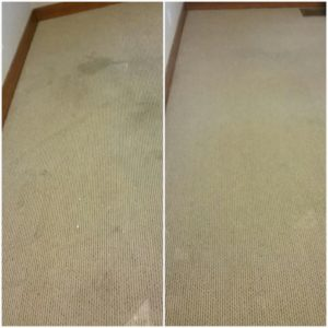 5-carpet-cleaning-washington-il